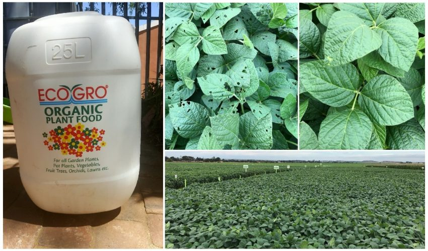 Eco Gro Fish Emulsion Together With Explo Grow Trials On Soybeans