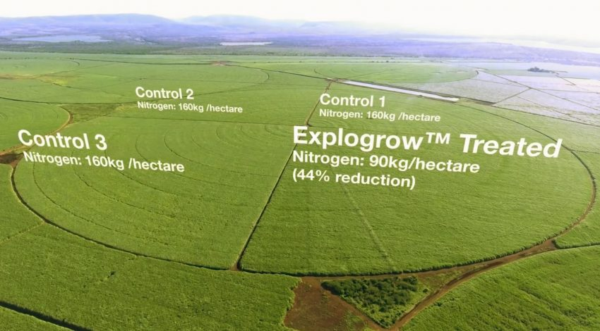Growing much more Sugarcane with beneficial microbes also fixing atmospheric Nitrogen