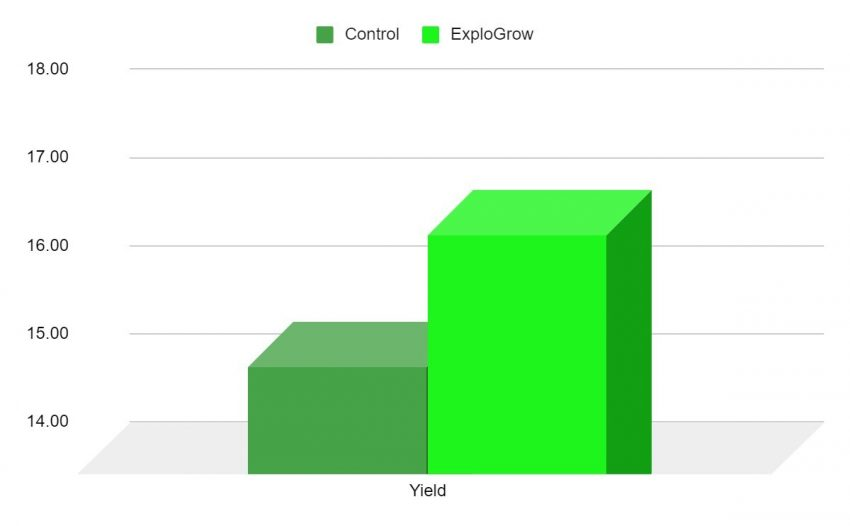 Harvest Data From No Till Maize Trial