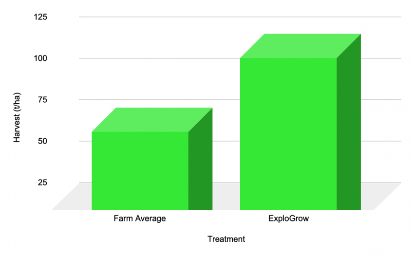 Pumpkin yield dramatically increased with bio-fertiliser