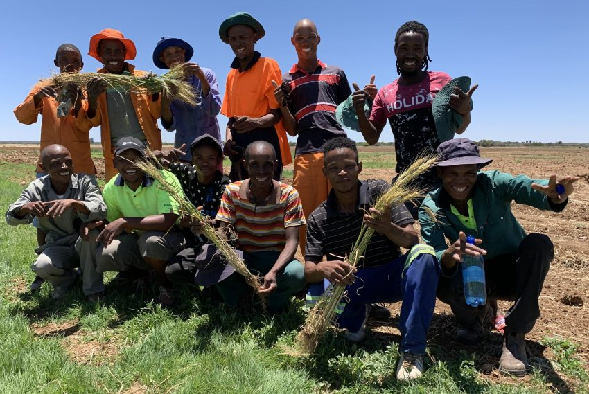 Wheat Yield Increased With Explo Grow During Youth Development Farm Trials