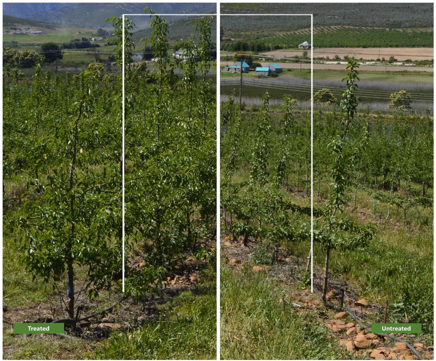 pear-tree-farm-liquid-organic-fertilizer-control-2