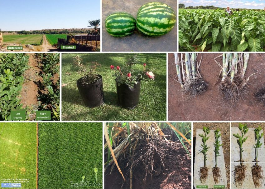 soil beneficial microbes in bio-fertilizer plant health and bio control functions explained