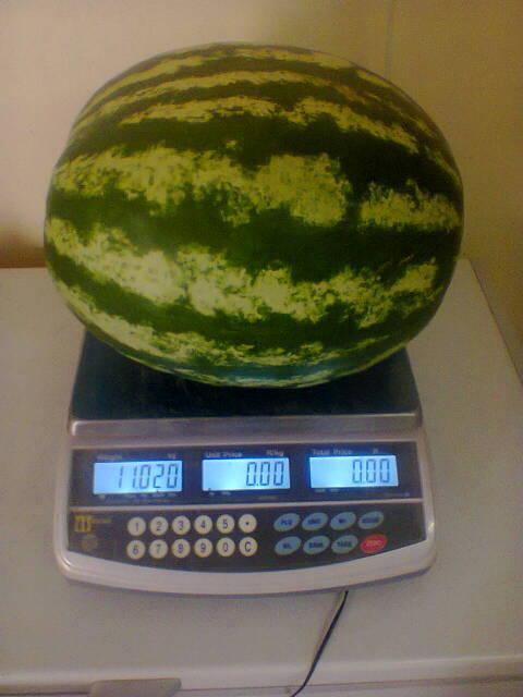 scale.jpg#asset:43